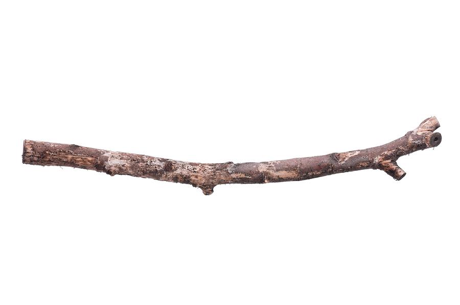Branch clipart wooden stick, Branch wooden stick Transparent.