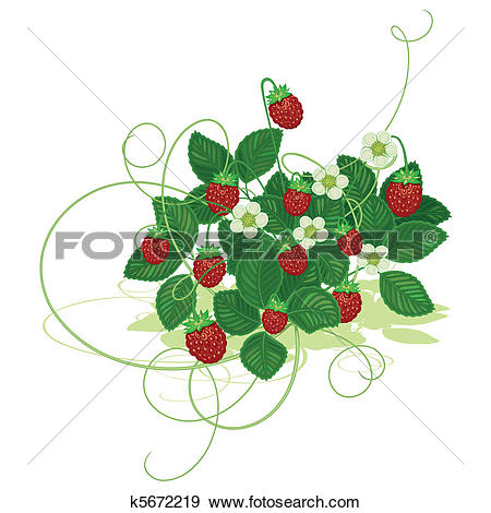 Clip Art of Wood wild strawberry k5672219.