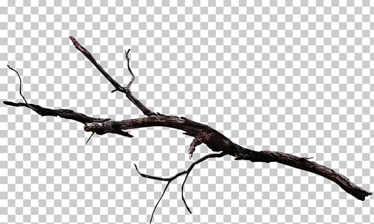 Twig Plant Stem Leaf Wood /m/083vt PNG, Clipart, Black And.