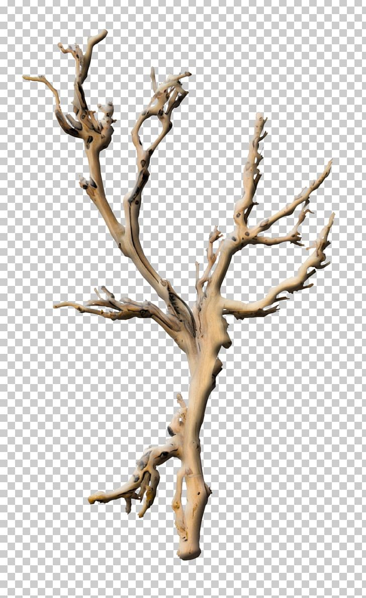 Branch Tree Plant Root Twig PNG, Clipart, Branch, Branches.