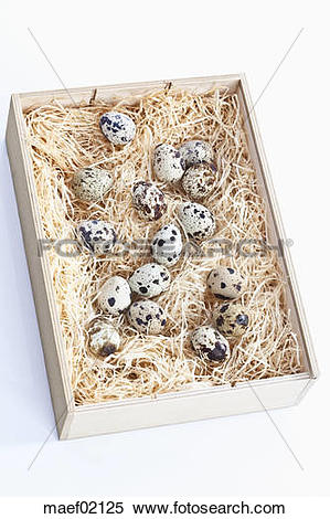Stock Image of Spotted Quail eggs in wooden box with wood wool.