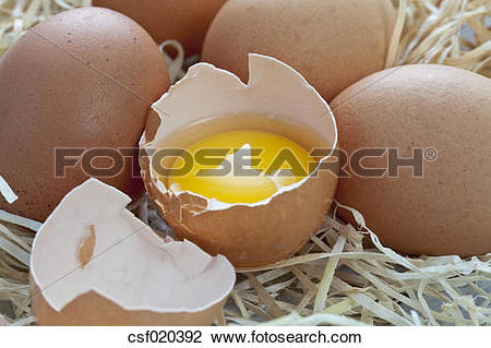Stock Photo of Fresh eggs on wood wool csf020392.