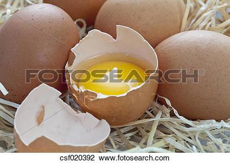 Stock Photo of Fresh eggs on wood wool csf020392.