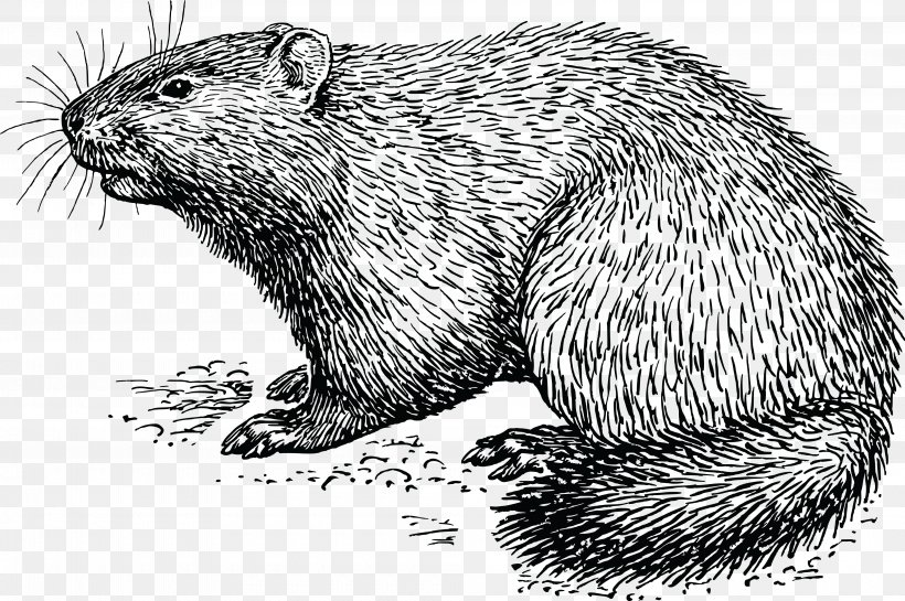 Groundhog Day How Much Wood Would A Woodchuck Chuck Clip Art.