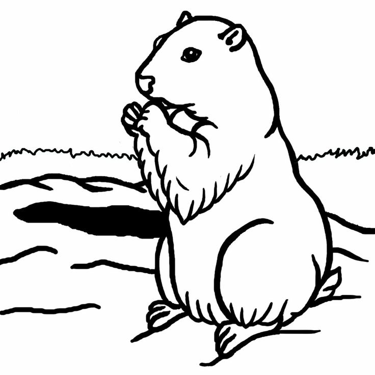0 images about groundhog day on free clipart 2.