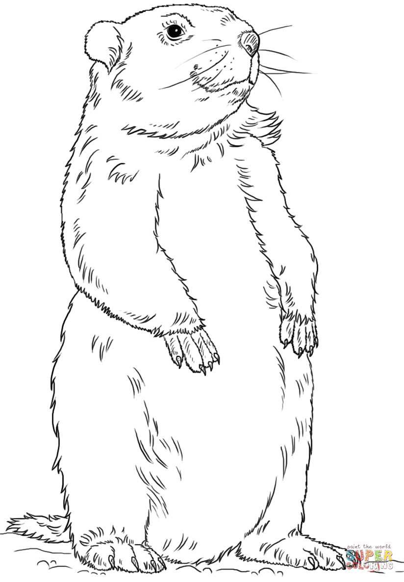 Groundhog Clipart Coloring Pages.