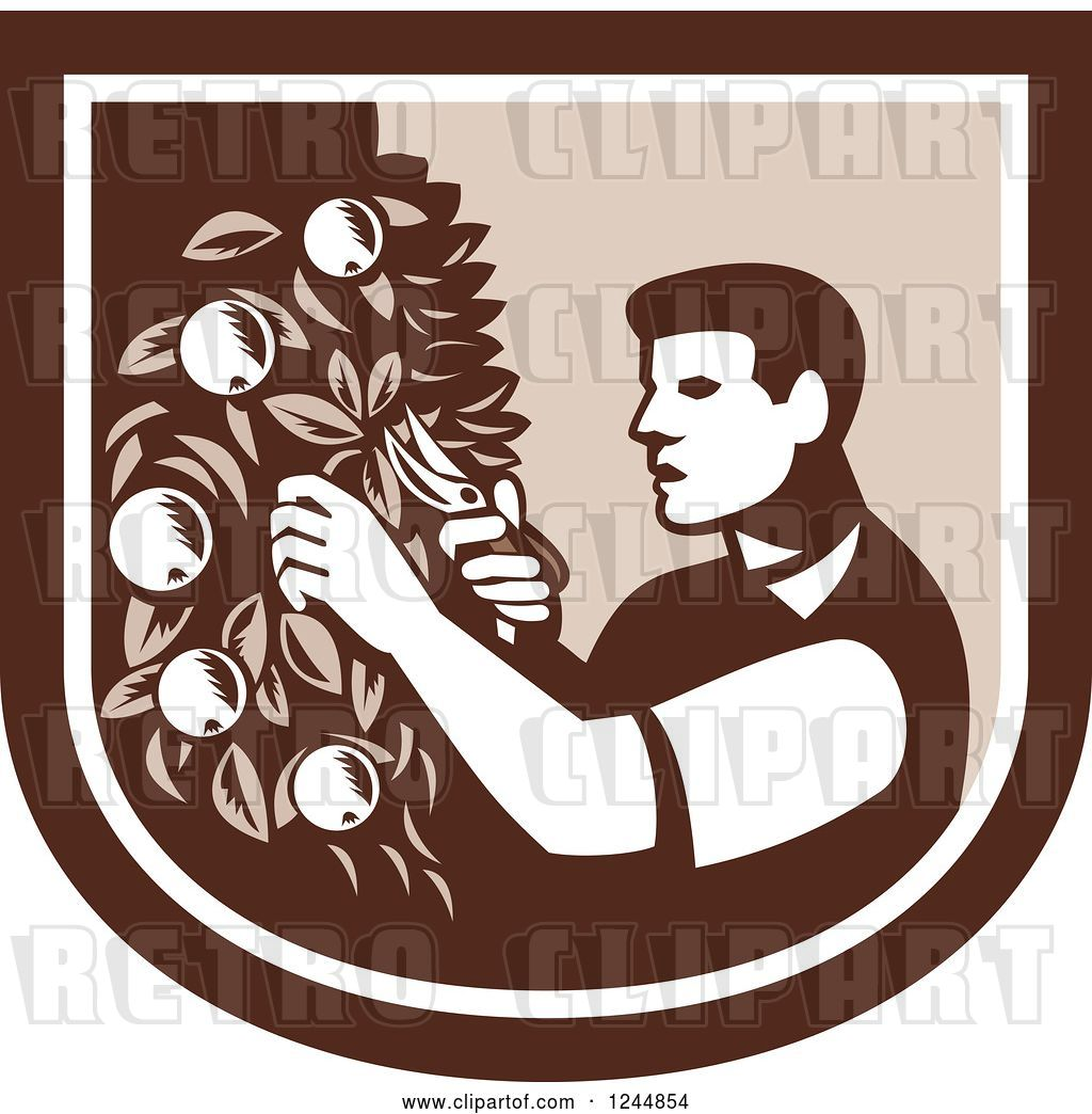 Vector Clip Art of Retro Woodcut Farmer Pruning Apple Trees.