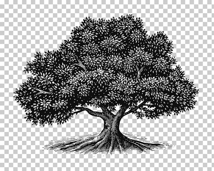 Tree Oak Drawing Woodcut Illustration, Bush, gray tree.