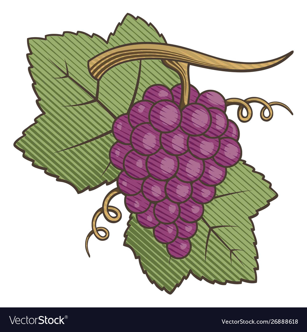 Red grapes woodcut.