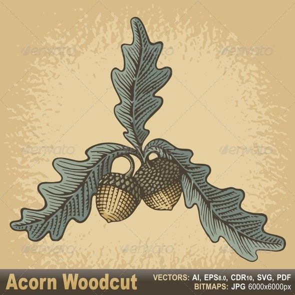 Hand drawn acorns and oak leaves with woodcut shading on.