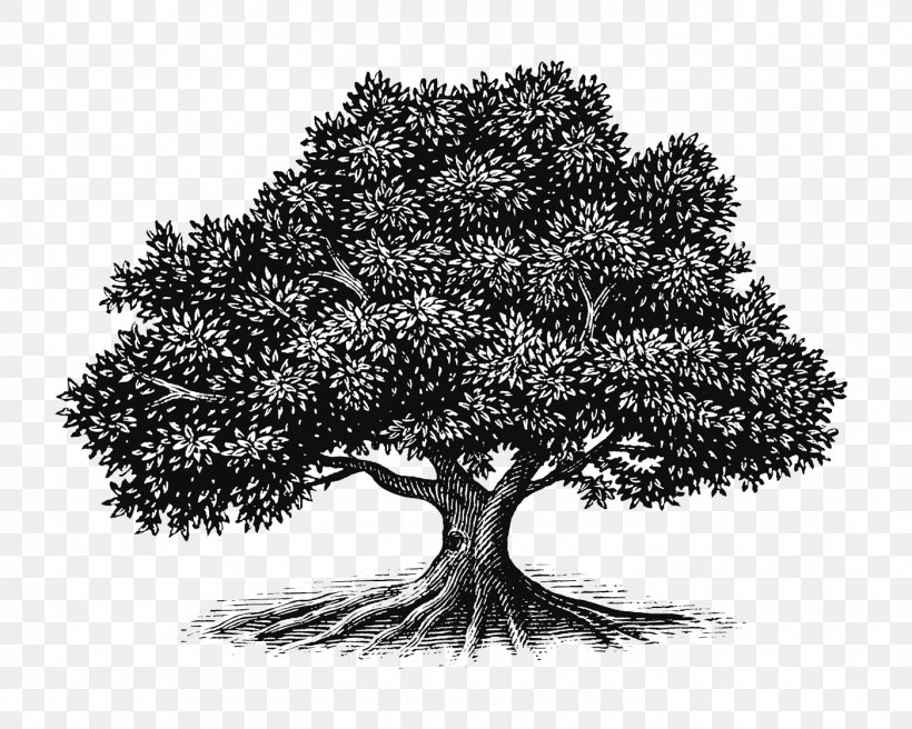 Tree Oak Drawing Woodcut Illustration, PNG, 1400x1120px.