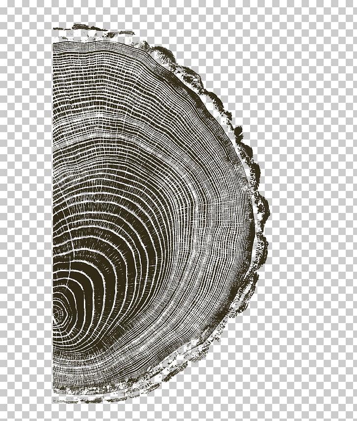 Woodcut Printing Printmaking Art Drawing, tree ring PNG.