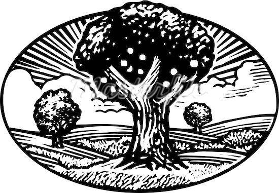 fruit tree woodcut.