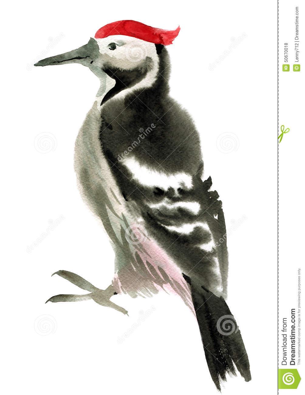 Watercolor Illustration Of Woodpecker Stock Photo.