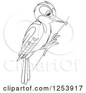 Happy Smiling Woodpecker Bird Posters, Art Prints by Cory Thoman.