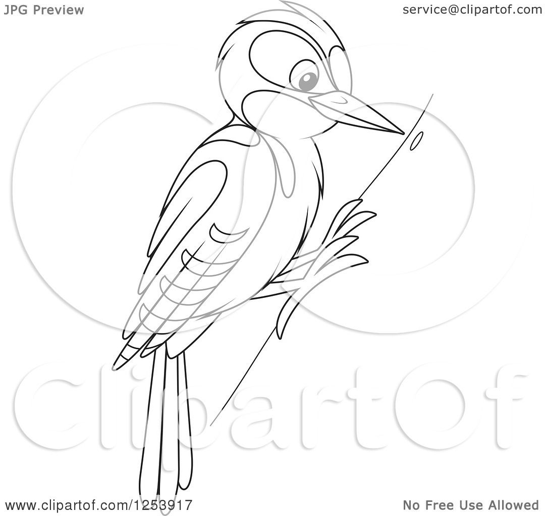 Woodcutter Bird Clipart.