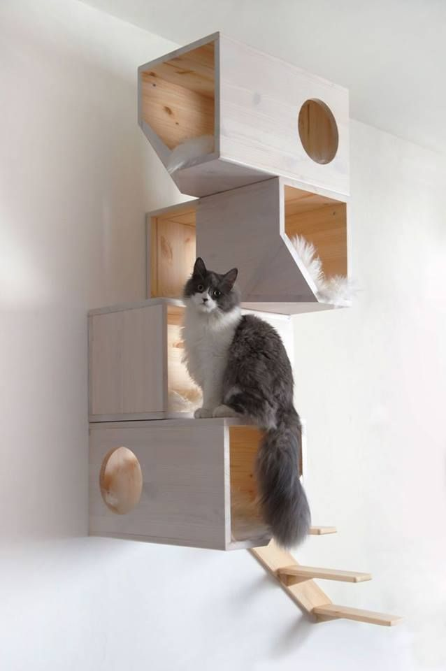 1000+ ideas about Cat Furniture on Pinterest.