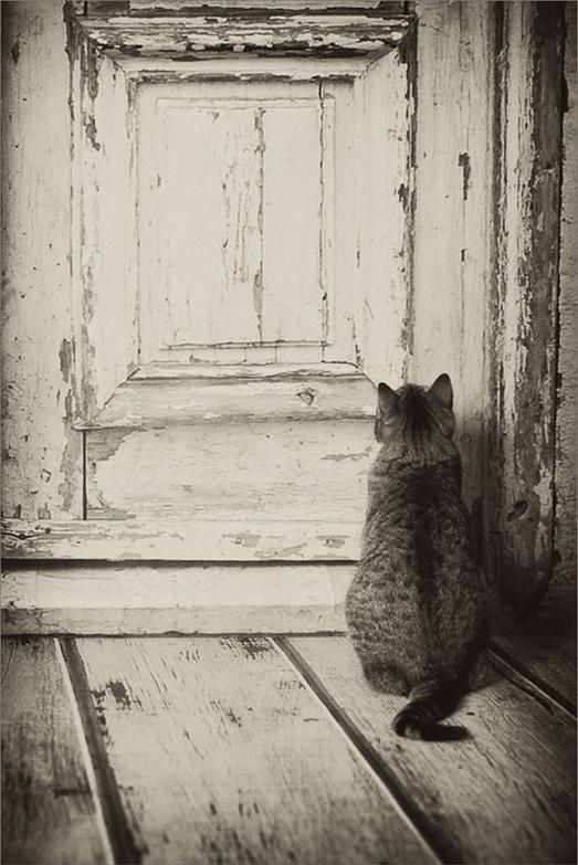 1000+ images about Vintage CATS. on Pinterest.