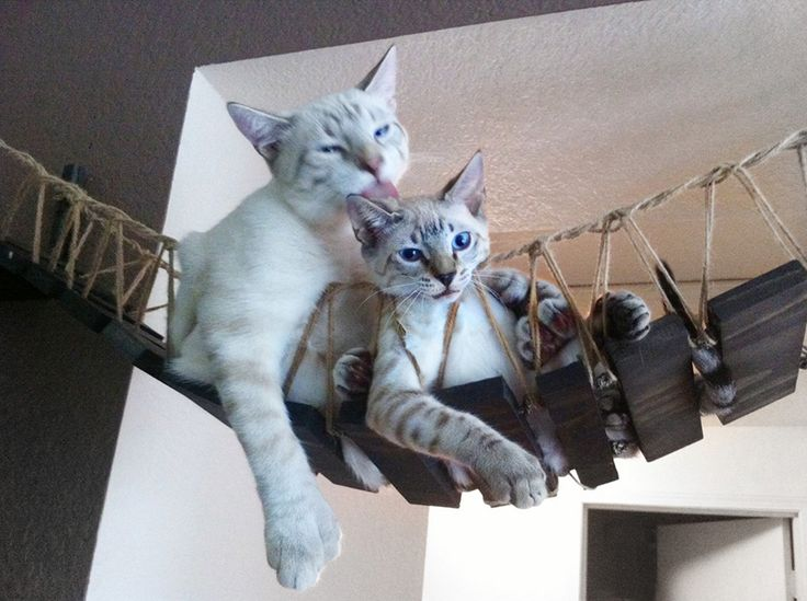 1000+ images about Cats on Pinterest.