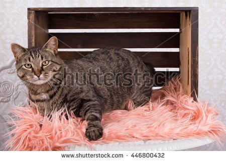 Tortoiseshell Cat Stock Photos, Royalty.