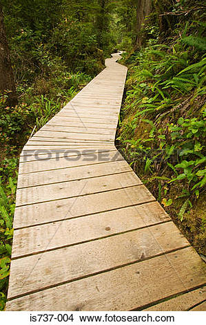 Stock Photo of Wooden path through a forest is737.