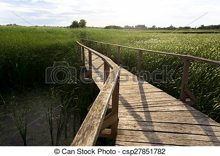 Stock Illustration of Wooden path trough the reed outdoors at.