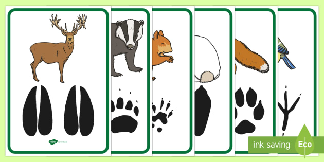 Woodland Animal Footprints Poster Pack.