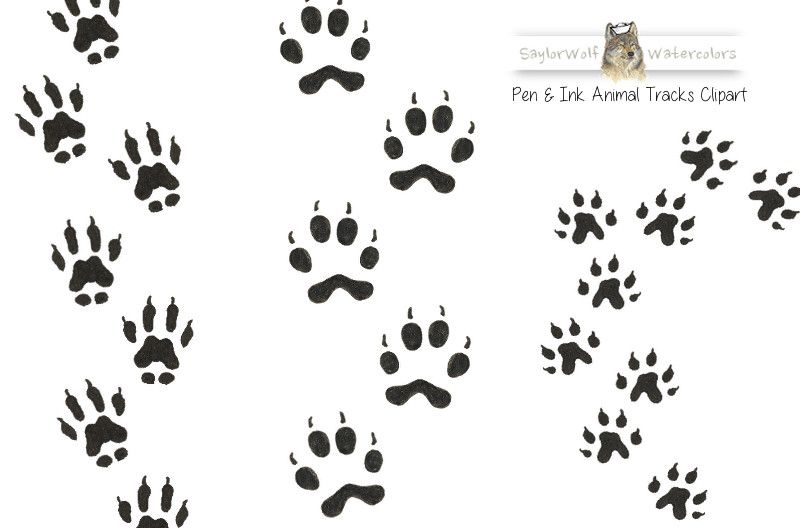 Woodland Animal Tracks Clip Art by SaylorWolf Watercolors on.
