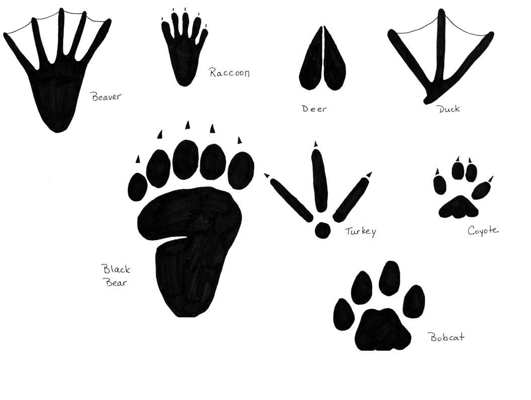 19 Awesome raccoon tracks clipart.