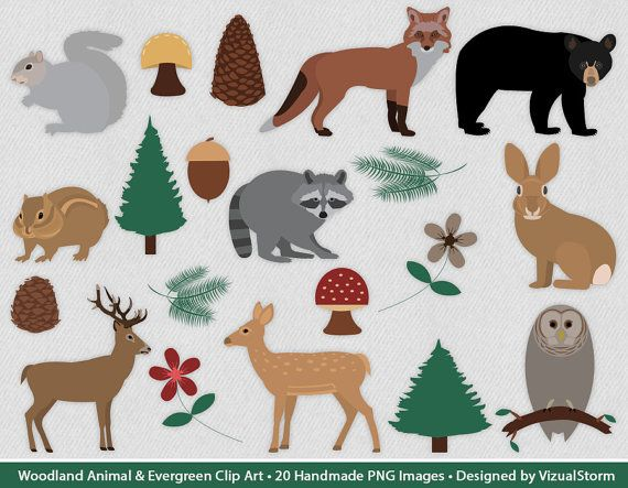 Woodland Clipart Forest Critters, Plants Trees and Forest.