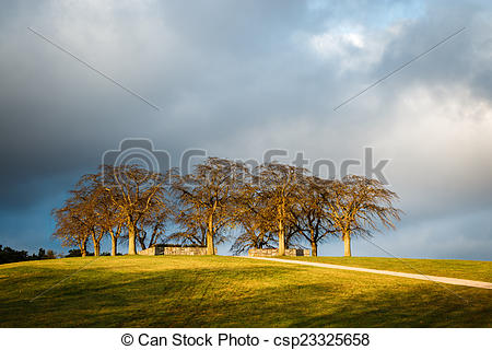 Stock Images of Elm Grove at Woodland Cemetery in Stockholm.