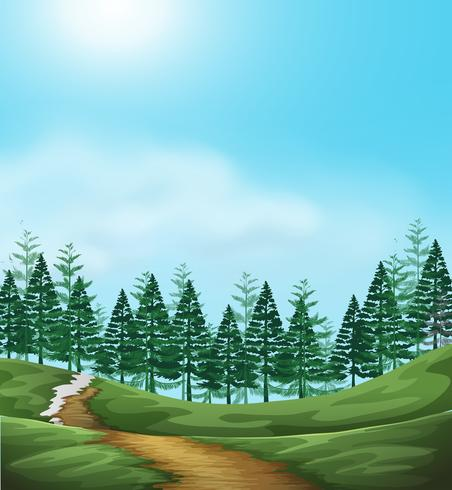 A Woodland background scene.