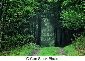 Stock Image of woodland path.