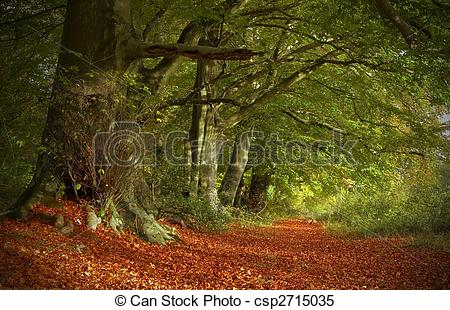 Stock Images of Autumnal Woodland Path.