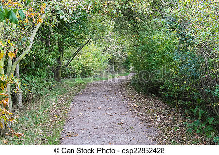 Stock Photo of Woodland path.