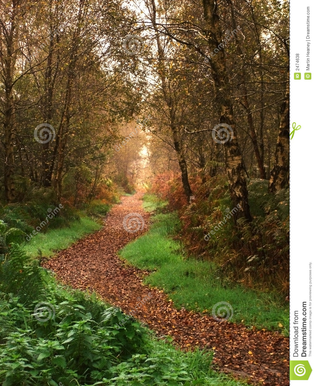 Woodland Path In The Fall Royalty Free Stock Photos.