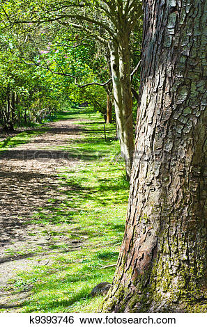 Stock Images of Tree on Woodland Path k9393746.