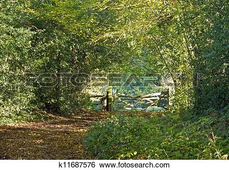 Stock Images of Woodland Path and Gate k11687576.