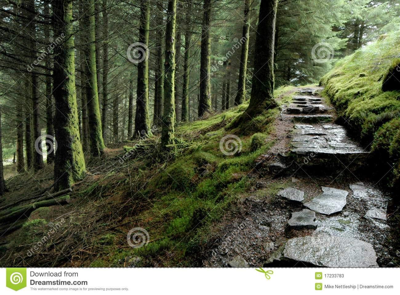 Woodland Path Stock Photos.