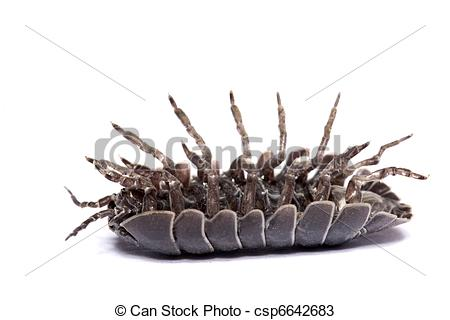 Stock Photos of Woodlice bug.