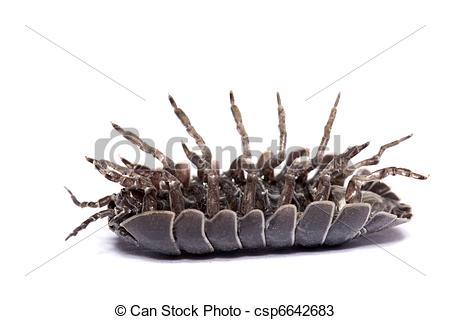 Stock Photos of Woodlice bug.