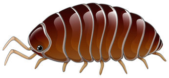 Woodlouse Stock Illustrations.