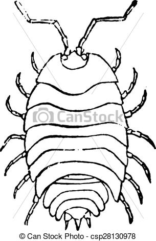 Woodlouse Stock Illustrations. 150 Woodlouse clip art images and.