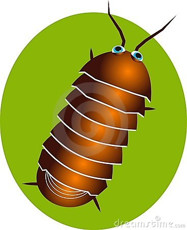 Pillbug Stock Illustrations.