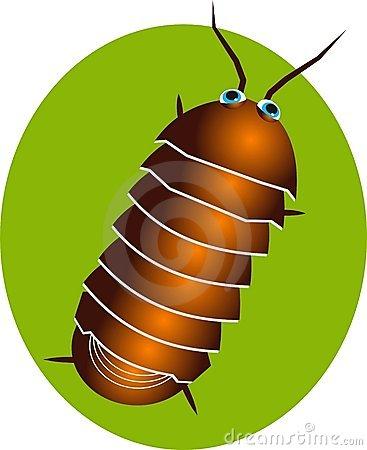 Pillbug Stock Illustrations.