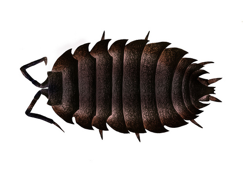 Woodlouse clipart 4 » Clipart Station.