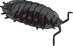 Woodlouse clipart » Clipart Station.