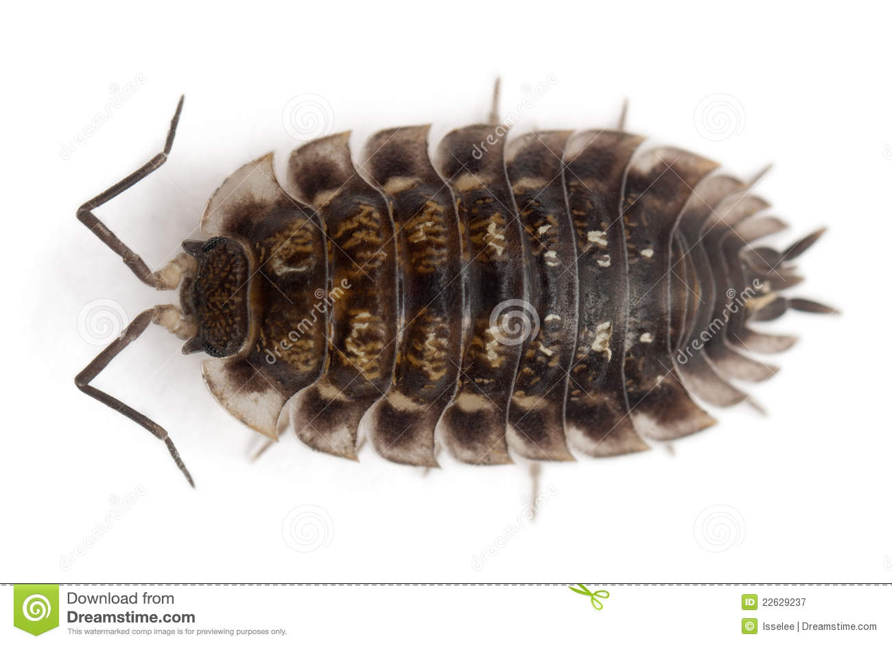 Woodlouse clipart 6 » Clipart Station.