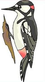 Free Woodpecker Clipart.