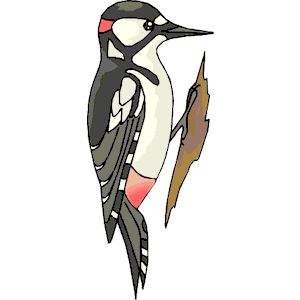 Woodpecker clipart, cliparts of Woodpecker free download (wmf, eps.
